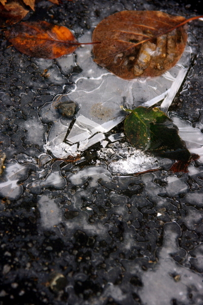 10.11.24.氷.JPG