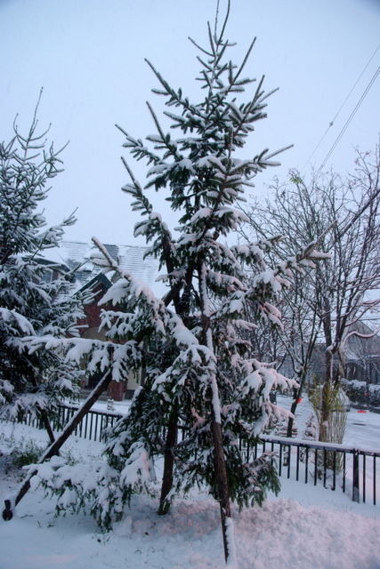 10.11.29.雪.JPG