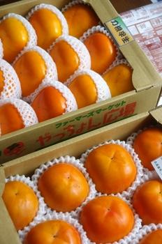 11.10.18.よっちゃん柿1s.jpg