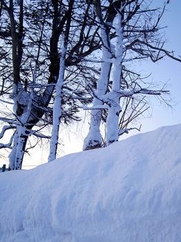 12.1.27.-17.5℃の朝1s.jpg