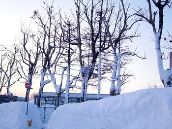 12.1.27.-17.5℃の朝s.jpg