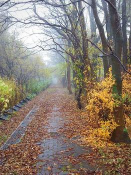 12.11.8.朝靄の散歩道1.JPG