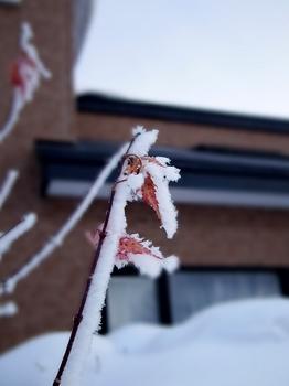 12.2.18.樹氷の朝2s.jpg
