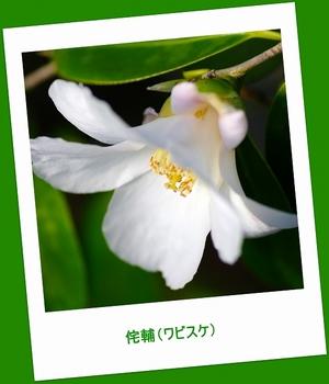 12.3.11.侘輔s.jpg