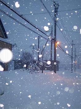 雪の日.3.JPG