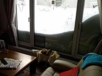 13.2.21.大雪10.jpg