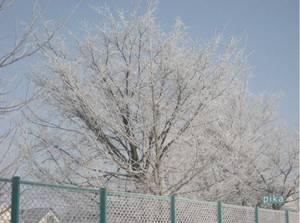 霧氷.JPG