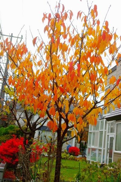 10.11.12.桜s-.jpg