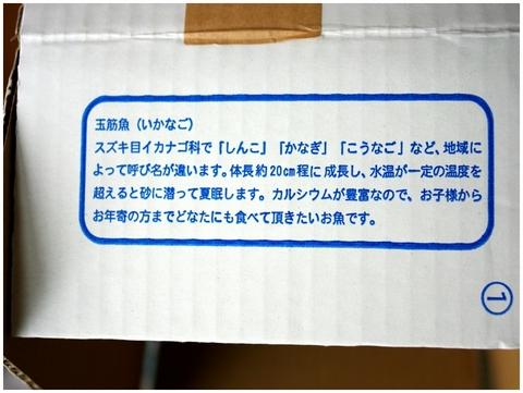 11.3.11.イカナゴ1.JPG