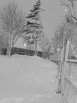 12.1.23.朝の雪10s.jpg