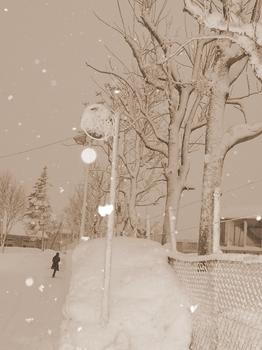 12.1.23.朝の雪5s.jpg
