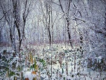 12.11.26.散歩道の森.JPG