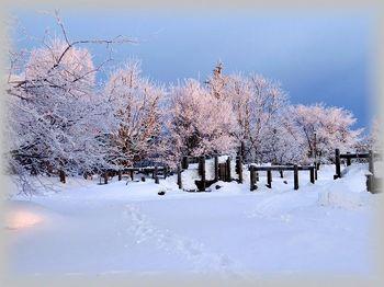 12.2.18.樹氷の朝12s.jpg