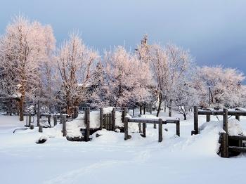 12.2.18.樹氷の朝14s.jpg