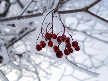 12.2.18.樹氷の朝6s.jpg