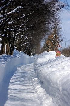 12.2.20.散歩道s.jpg