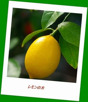 12.3.11.レモンs.jpg