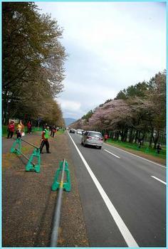 12.5.8静内桜..5