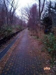 14.12.1.雪の無い散歩道.jpg