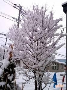 15.3.13.雪の花.jpg