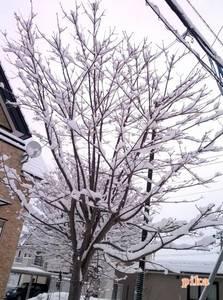 15.3.13.雪の花1.jpg