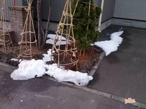 15.3.20.残雪.jpg