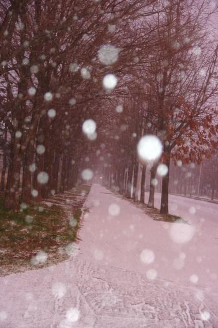 雪降る朝 (4).JPG