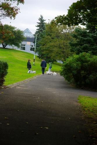 s-10.10.9.犬の散歩.jpg