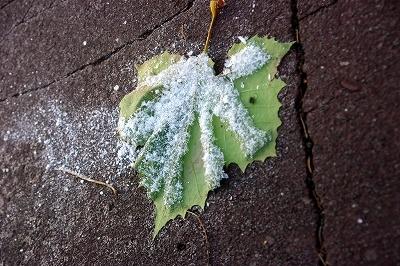 s10.11.16.雪7.jpg